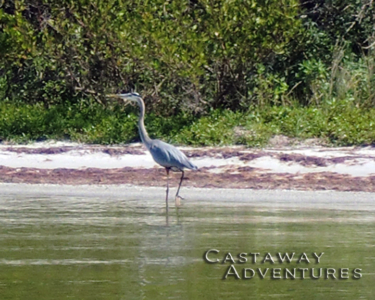 Nature tours with Cast Away, Cocoa beach