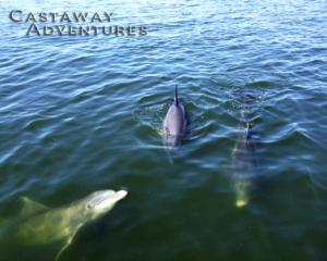 Dolphin tour, nature tour, Cocoa Beach
