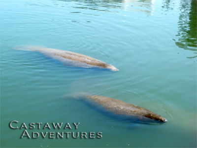 Manatee and nature tours Cocoa Beach