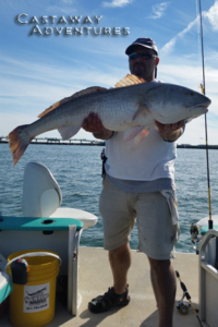 Bull Redfish in Cocoa beach Florida