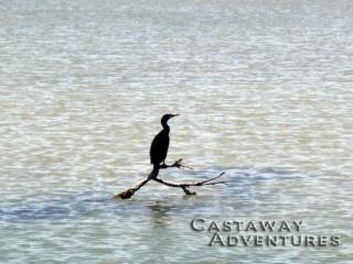 Nature tours, birding Cocoa beach
