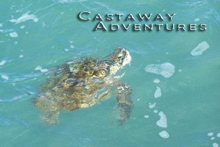 Sea turtle on nature tour in Cocoa Beach