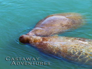 Manatee tours in cocoa Beach