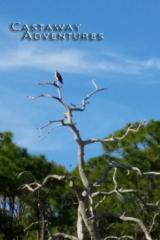 Cocoa Beach Nature tours, osprey