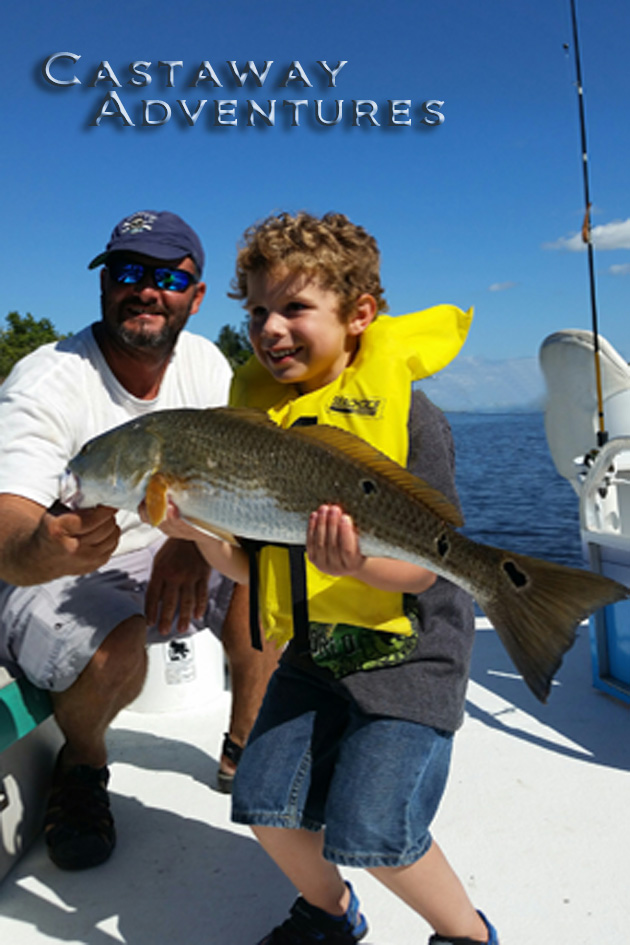 Banana river lagoon redfish