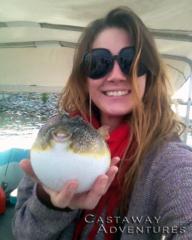 Puffer fish Cocoa Beach Florida