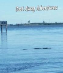 alligator cocoa beach nature tours