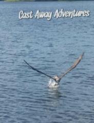 Osprey on Cast Away Adventures nature tour