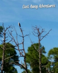 Osprey on Cast Away Adventures nature tours